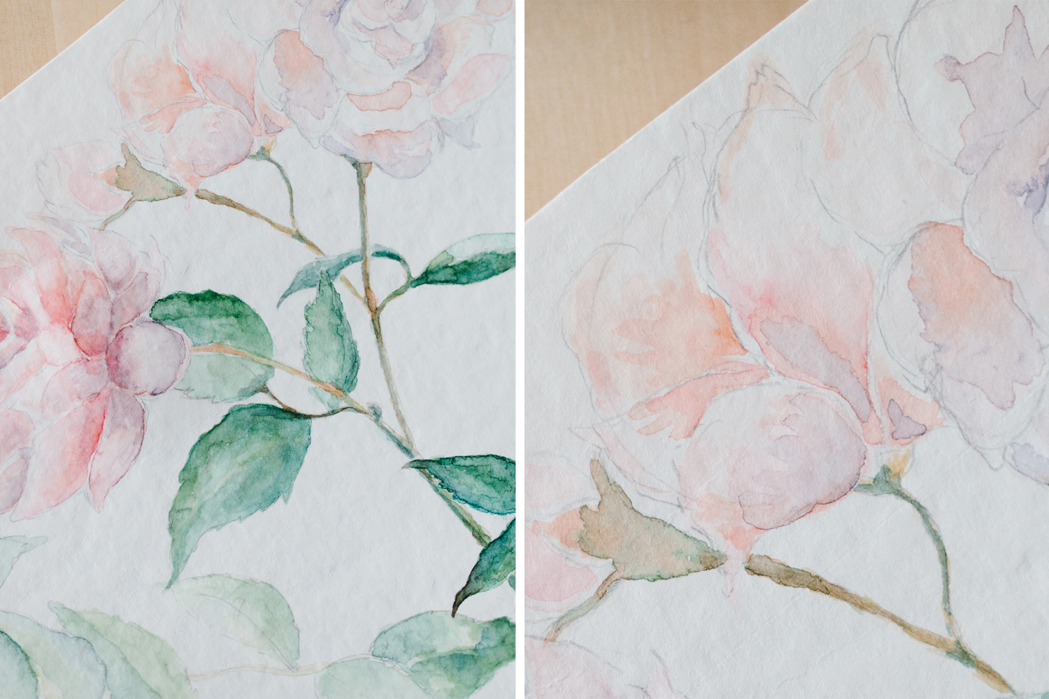 Rose_watercolor_willow visuals 1